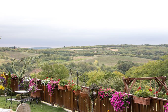 Things to do in Novi Sad, Serbia: wine country