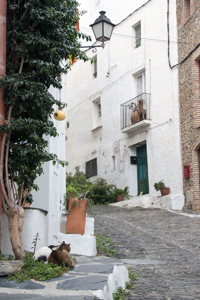 Cats. Best places to go in Spain: Cadaqués, Costa Brava
